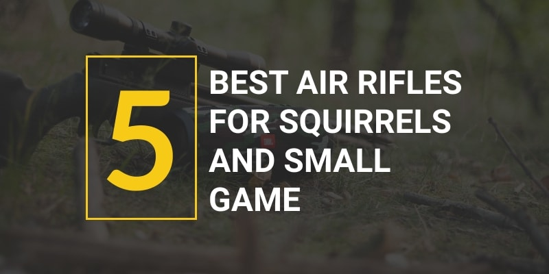 best air rifles for squirrels