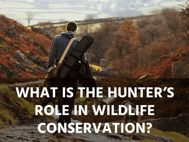 What Is the Hunter's Role in Wildlife Conservation?